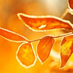 Morning_Sun_on_Frost-Covered_Leaves_by_Gary_A_Stafford